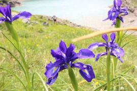 iris-gloriettes-gedre-location.jpg