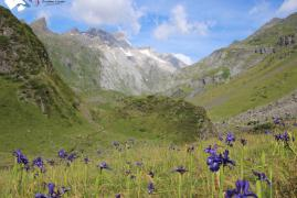 vallee-ossou-vignemale-iris-location-gedre.jpg
